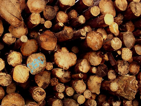 log pile by SNAPPYDAVE
