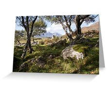 Coille Gaireallach copse Greeting Card