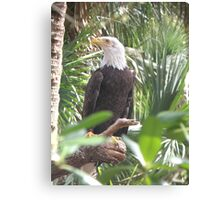 The Eagle has Landed Canvas Print