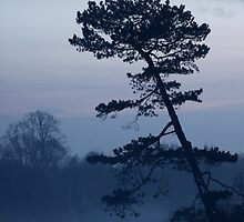 Winter Tree by Tim Emmerson