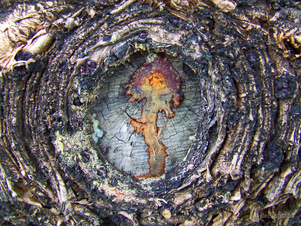 """Tree Embryo"" by debsphotos"