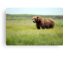 Walking With the Brown Bears in Hallo Bay Canvas Print
