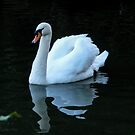 White Swan by DPalmer