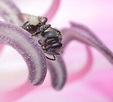 Stingless Bee by Andrew Trevor-Jones