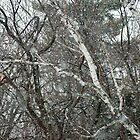 February big snow flakes by Roslyn Lunetta