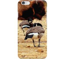Bison's Birds by Brijo iPhone Case/Skin