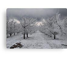 apple orchard 2 Canvas Print