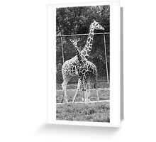 Crossing Paths Greeting Card