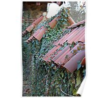 shingles and ivy Poster