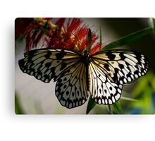 Paper Kite on Bottle Brush Canvas Print