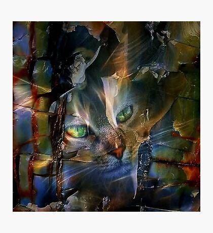 Cat Glancing Photographic Print