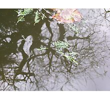 'Reflections' Photographic Print