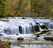 Sweet Creek, Oregon by aussiedi