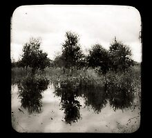 Reflections by Jules Campbell