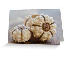 Sputnik Sea Urchin Greeting Card