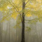 fall into yellow by dc witmer