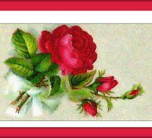 red rose by cynthiab