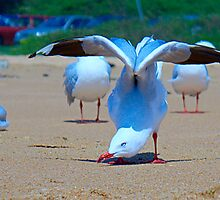 yoga seagull by Matt Penfold