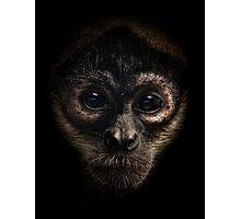 Spider Monkey Photographic Print
