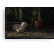 waiting for my master Canvas Print