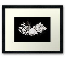 Seashell Beauty Framed Print