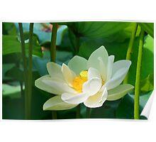 White Lotus Poster