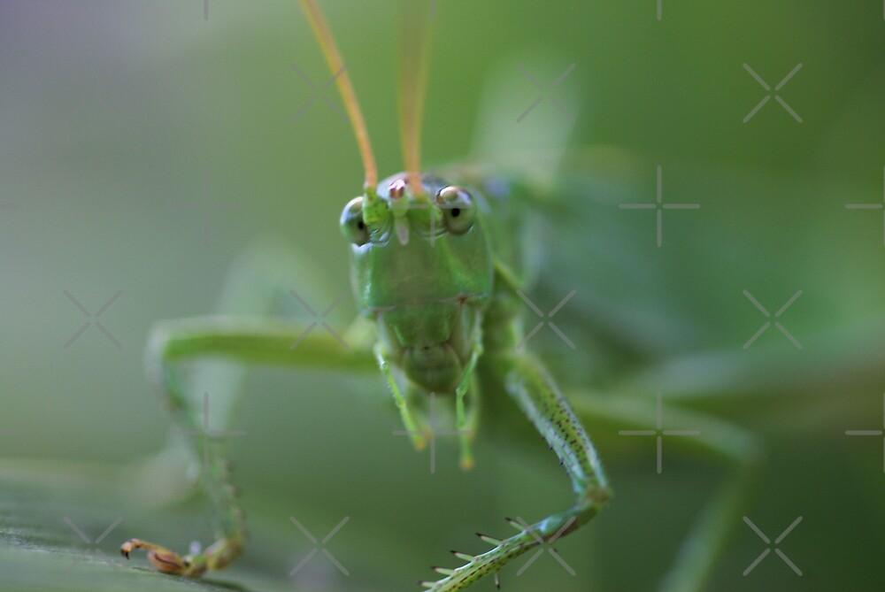 Grasshopper by AnnieSnel