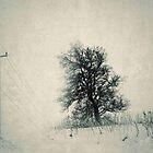 Winter Journeys by JOSEPHMAZZUCCO