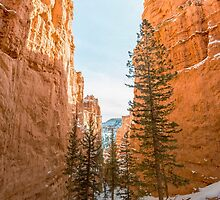 Peek-A-Boo Loop – Bryce Canyon National Park, Utah by Jason Heritage