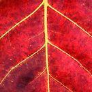 RED by Paula Bielnicka