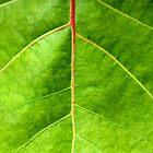 GREEN by Paula Bielnicka