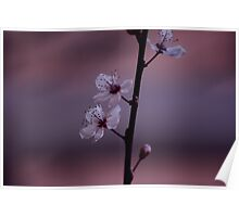 Silky Pink Blossom Poster