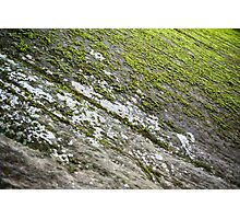 Hidden Canyon Moss – Zion National Park, Utah Photographic Print