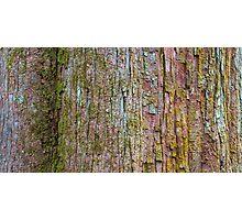 Swamp Tupelo Close Up – Congaree National Park, South Carolina Photographic Print
