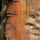 wooden fire by yvesrossetti
