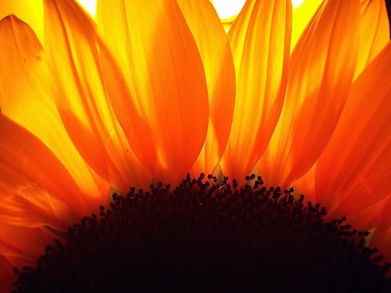Sunburst by DottieDees