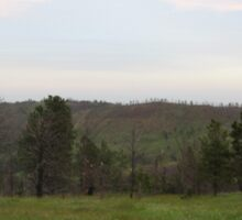 Scenery from the Black Hills Sticker