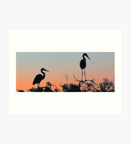 Great Blue Heron - The Rookery Art Print