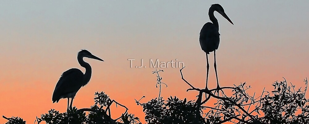 Great Blue Heron - The Rookery by T.J. Martin