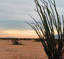 Desert Beauty by HeavenOnEarth