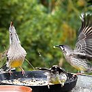 When the pie was opened the Wattlebirds began to sing..! by Larry Lingard-Davis