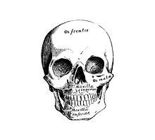 Science, Skull Diagram Drawing by tshirtdesign