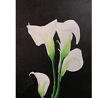Calla Lily Photographic Print