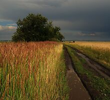 Roads of my country by Mykola
