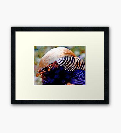 Chinese Pheasant Framed Print