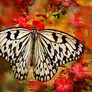 Kite Butterfly by Barbara Manis