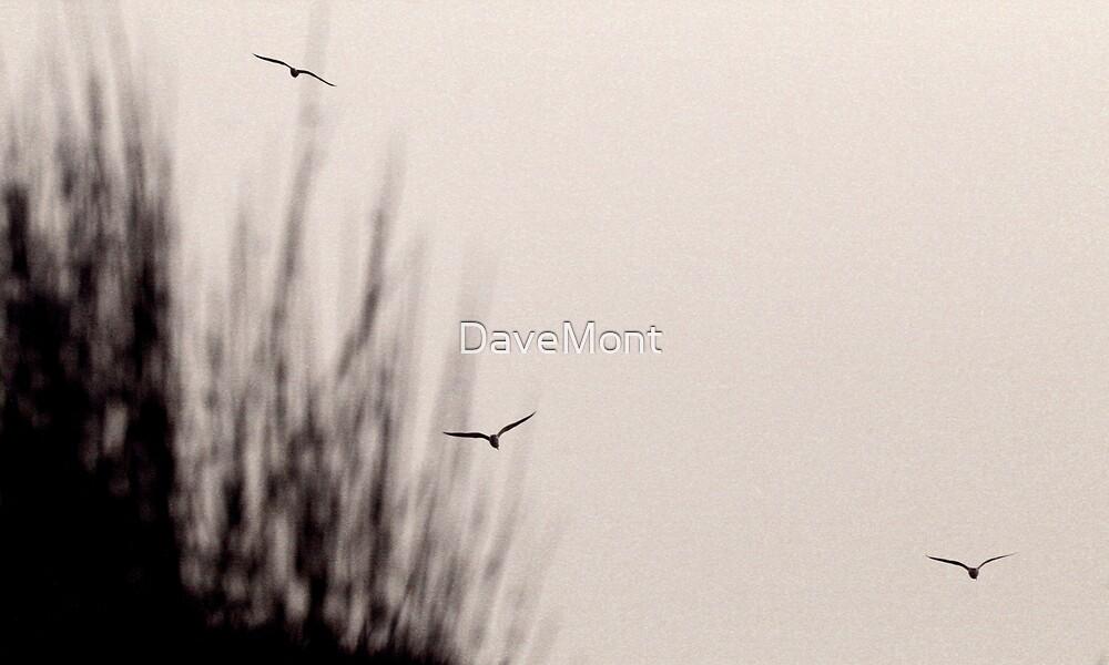 Black Hawk Down by DaveMont