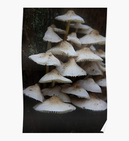 Mushroom Collection Poster