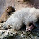 Baboon by Robert Kendall