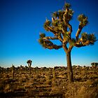 Joshua Tree 2 by boehmgraphics